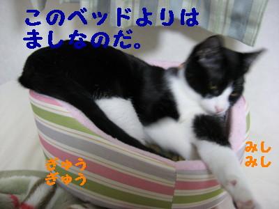20070604101520.jpg