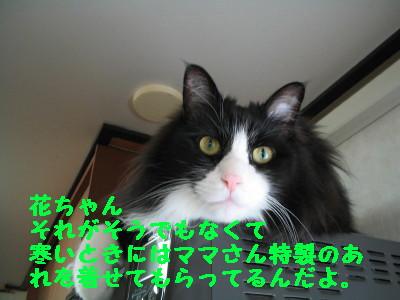20070912144946.jpg