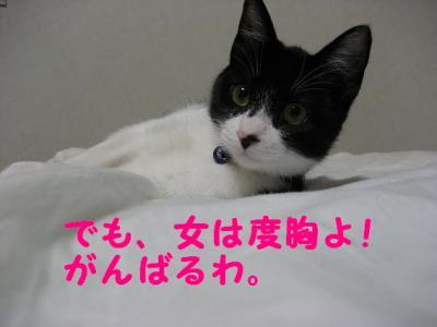 IMG_0072.jpg