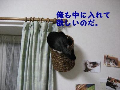 IMG_0211.jpg