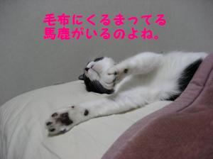 IMG_0415.jpg