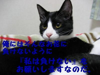 IMG_0662.jpg