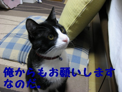 IMG_1124.jpg