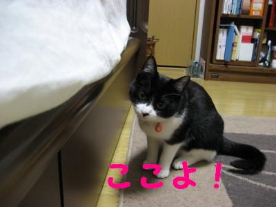 IMG_1322.jpg