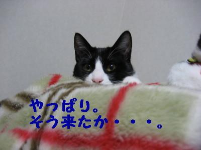 IMG_1350.jpg