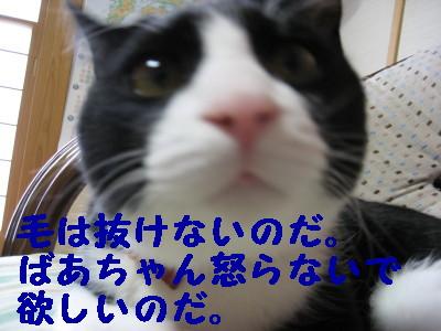 IMG_1396.jpg