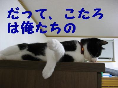 IMG_1504.jpg