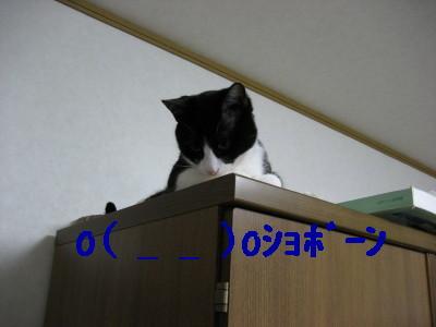IMG_1510.jpg