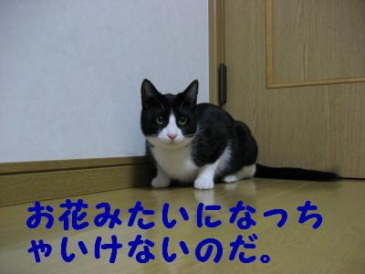 IMG_1527.jpg
