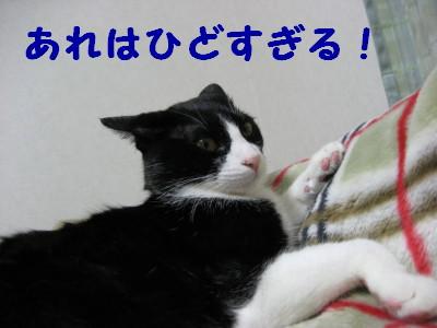 IMG_1687.jpg