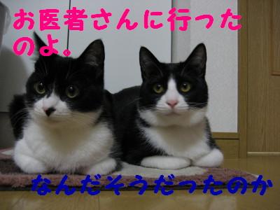 IMG_1800.jpg