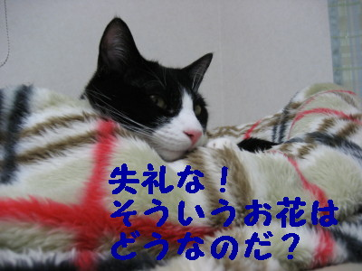 IMG_2045.jpg