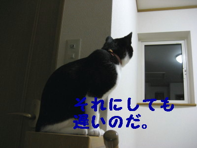 IMG_2194.jpg