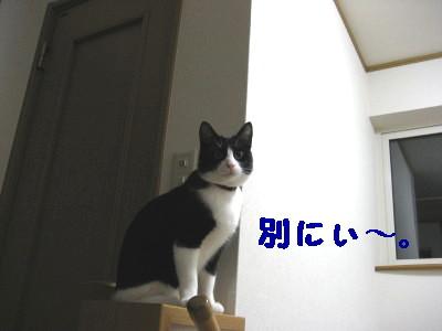 IMG_2197.jpg