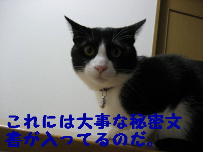 IMG_2239.jpg