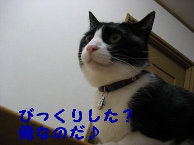 IMG_2248.jpg
