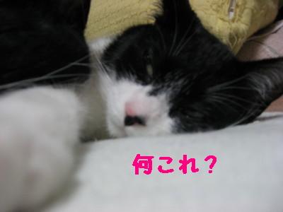 IMG_2301.jpg