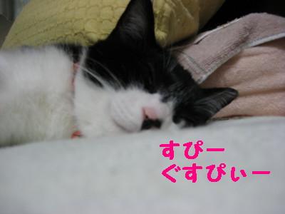 IMG_2308.jpg