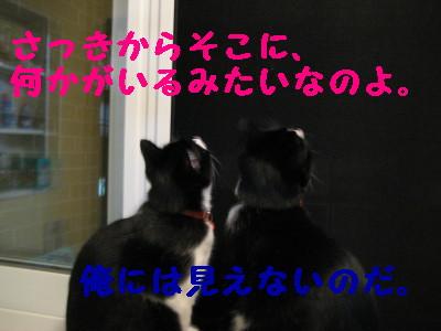 IMG_2334.jpg