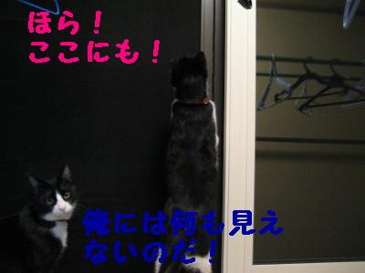 IMG_2337.jpg