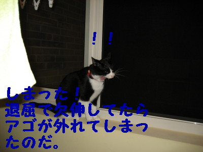 IMG_2347.jpg