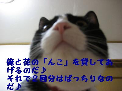 IMG_2377.jpg