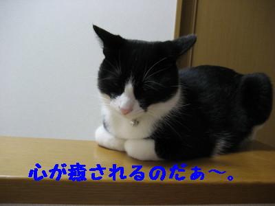 IMG_2382.jpg