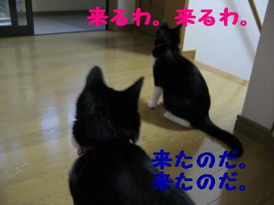 IMG_2441.jpg