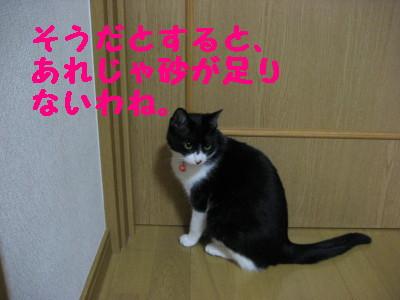 IMG_2449.jpg