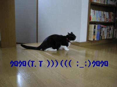 IMG_2458.jpg
