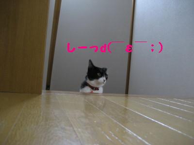 IMG_2463.jpg