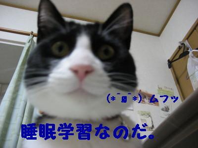 IMG_2828.jpg