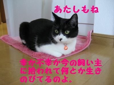 IMG_2847.jpg