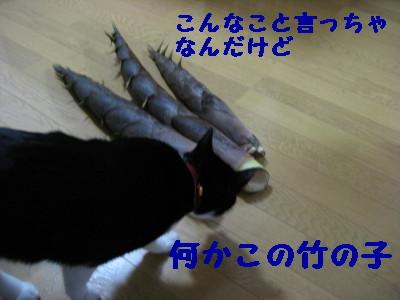 IMG_2934.jpg