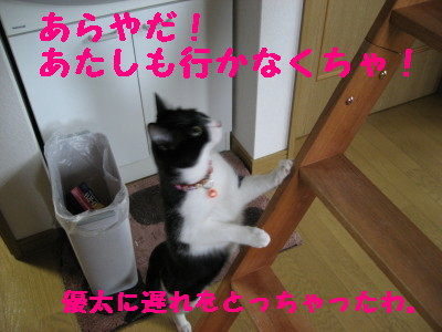 IMG_2960.jpg