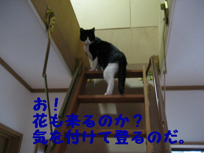 IMG_2962.jpg