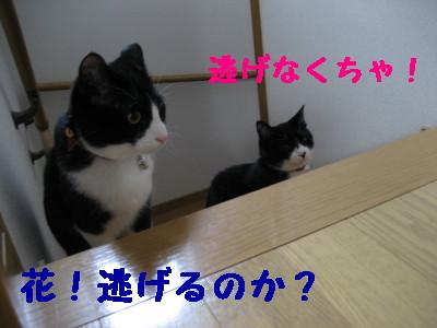 IMG_2988.jpg