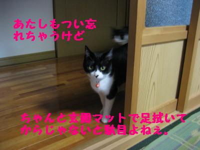 IMG_3106.jpg