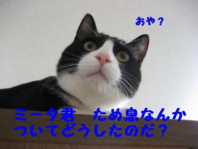 IMG_3228.jpg