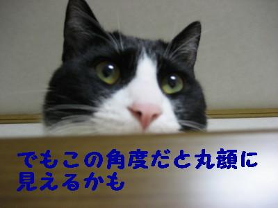 IMG_3252.jpg