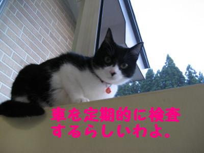 IMG_3324.jpg