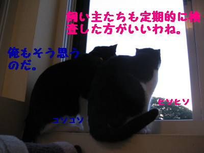 IMG_3334.jpg