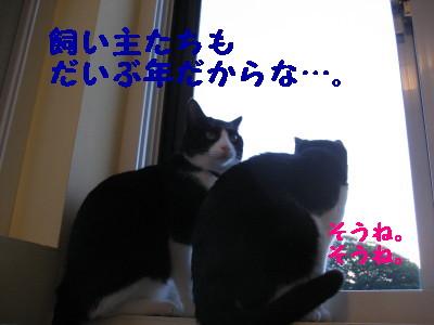 IMG_3335.jpg