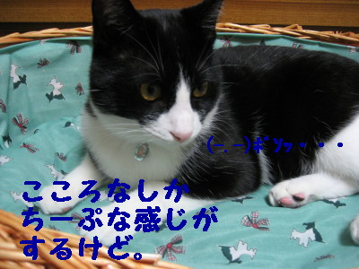 IMG_3387.jpg