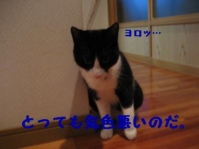 IMG_3489.jpg