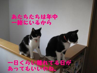 IMG_3783.jpg