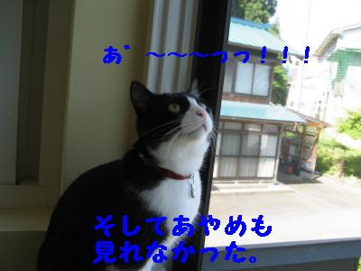 IMG_3962.jpg