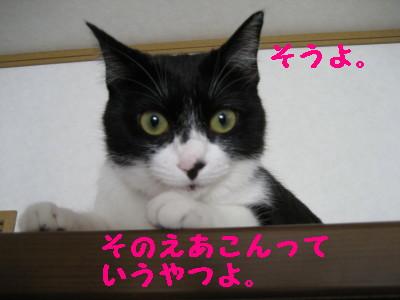 IMG_3974.jpg