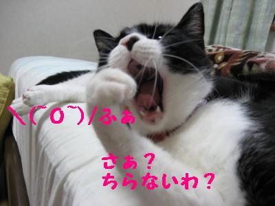 IMG_4047.jpg