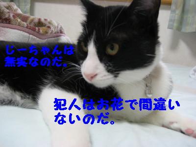 IMG_4079.jpg